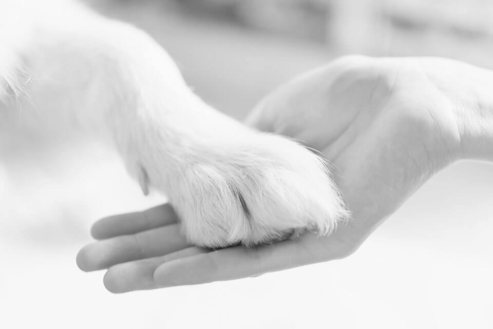 ZVITOREPKA SODOBNA VETERINARSKA BOLNICA Zvitorepci smo izkušeni, navdušeni, izobraženi in sodobno opremljeni ljubitelji živali. V Zvitorepki se celostno posvečamo zdravljenju malih živali. Radi imamo živali in svoje delo. Redno se izobražujemo doma in v tujini.